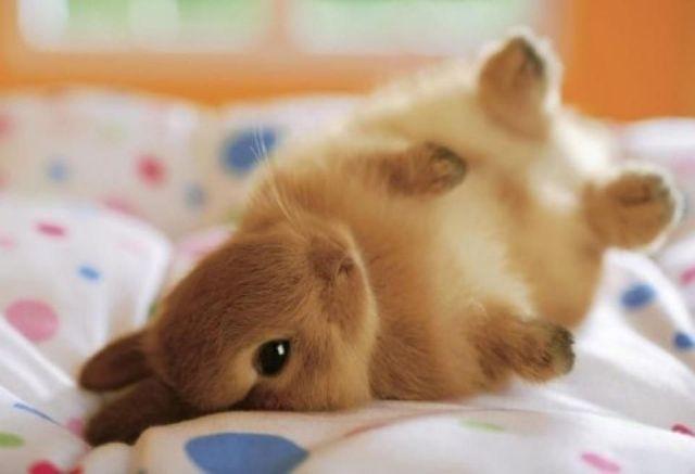 「兔子」的圖片搜尋結果