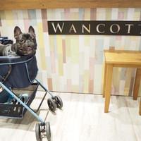 中華街の真ん中にあるドッグラン♡WANCOTTで愛犬の笑顔が見れる!