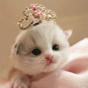 猫好きさん必見!激萌えからシュールまで。可愛すぎる猫雑貨4選