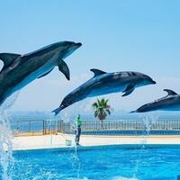 【九州編】イルカやウミガメと触れ合える!おすすめの水族館12選♪