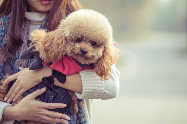 動物療法帶給人的3種效果是什麼呢?
