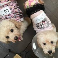 東京にある保護犬カフェ4選。審査に通れば里親になることもできる!