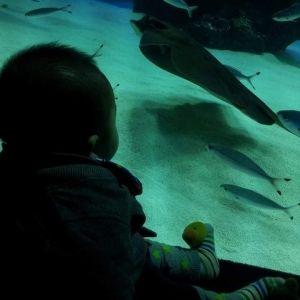 家族で行きたい水族館!子連れにオススメの水族館をご紹介