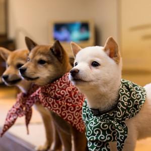 【京都】おすすめの犬カフェ6選♪ドッグカフェ巡りはいかがですか?
