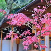 【2018秋】鎌倉の紅葉スポット♪穴場を厳選してリストアップ!