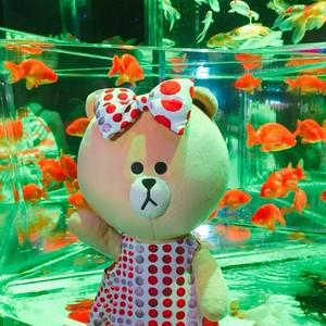大人気のアートアクアリウムも見逃せない!日本の夏を満喫できちゃうECO EDO 日本橋♪