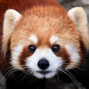 旅行するならぜひ立ち寄って♪日本全国から厳選!おすすめ動物園4選