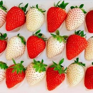 【長野編】人気のいちご狩りスポット10選!甘い完熟いちごはいかが?