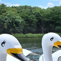 自然を感じるデートはいかが?手漕ぎボートに乗れる東京都内の公園6選