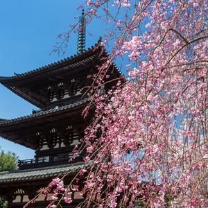 【奈良編】桜の名所10選♡古都の歴史を感じながらおしゃれにお花見