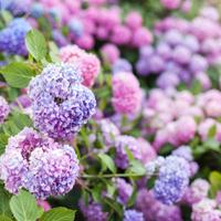 【奈良編】紫陽花の名所10選♪穴場やパワースポットも