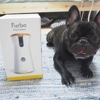 Furboはなんでもお見通し♡飼い主がいない間のJazzの様子を覗き見