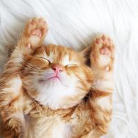 大人数のお泊まりも怖くない♡「可愛い寝顔」を作るための4STEP