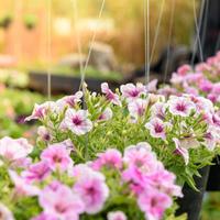 3月が旬のお花10選!窓辺やベランダをお花でいっぱいにしたい♪